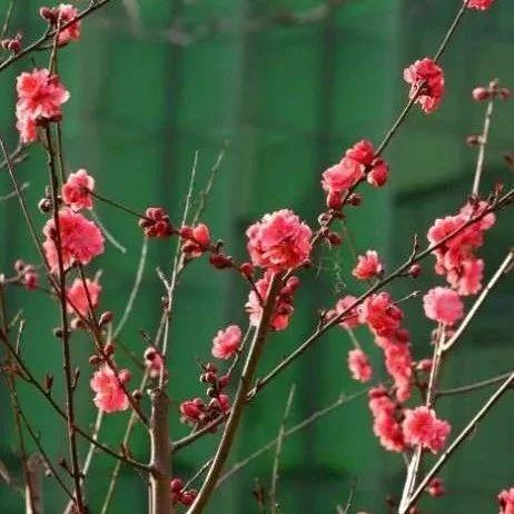 听,春的声音!